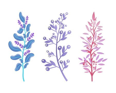 Wild Aromatic Herbs with Blossom and Small Berries Vector illustration.