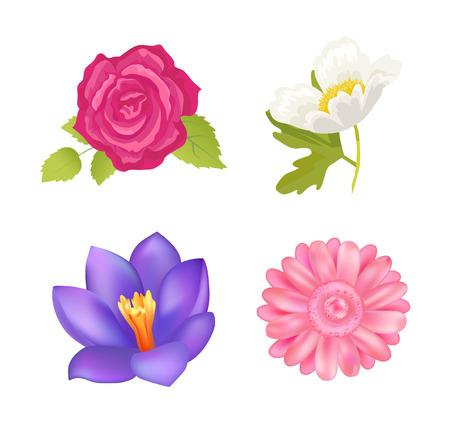 Rose and Gerbera Closeup, Vector Illustration Illustration