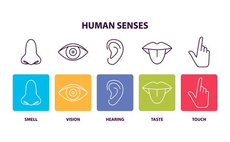 Affiche informative des sens humains avec illustration vectorielle de parties du corps Vecteurs