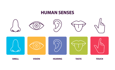 Human Senses Informative Poster with Body Parts vector illustration Banco de Imagens - 96864819