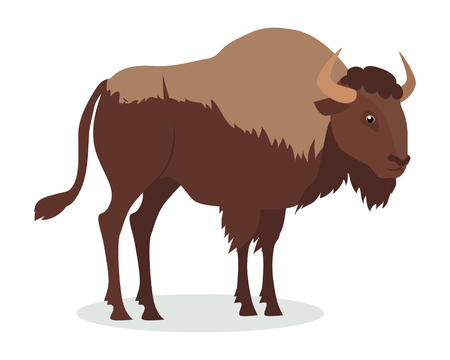 American bison cartoon character. Large bison male flat vector isolated on white. North America fauna. Buffalo icon. Animal illustration for zoo ad, nature concept, children book illustrating Çizim