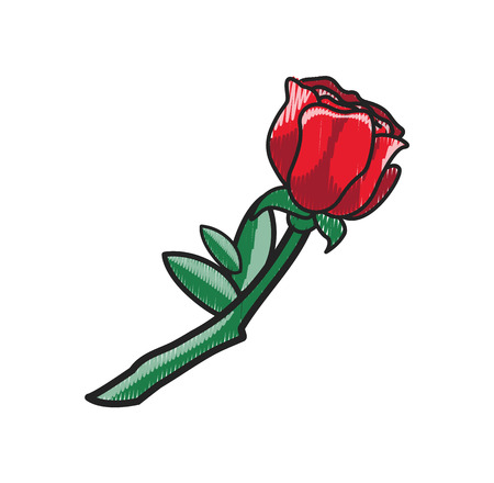 Closeup of Rose with Leaves on Vector Illustration