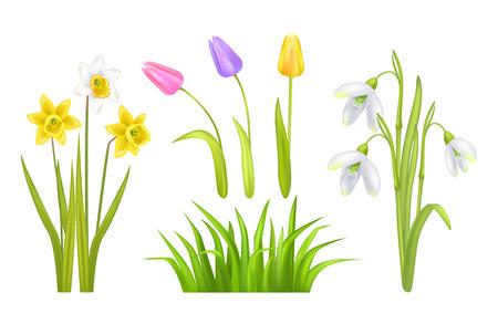 Spring Flowers Set Poster Vector Illustration