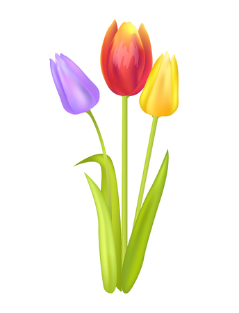 Colorful Bouquet with Three Tulips of Multi Color