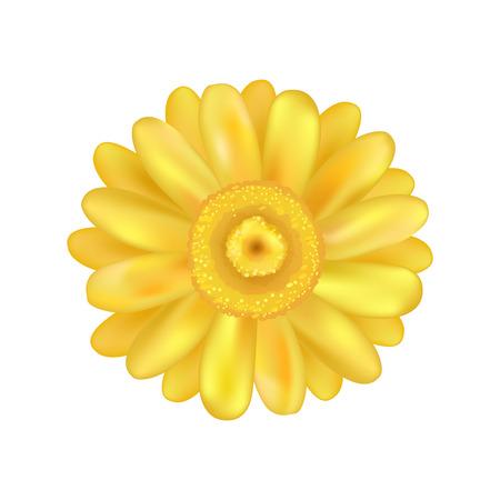 Yellow Zinnia Daisy Flower Vector Illustration