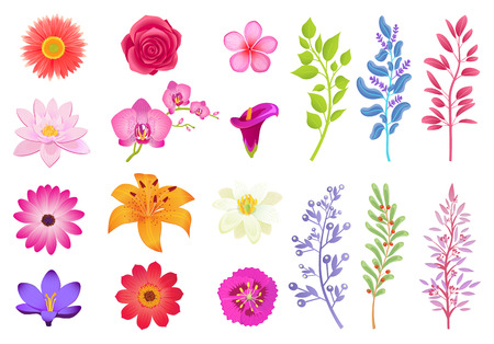 Bright Gorgeous Flowers and Wild Useful Herbs Illustration