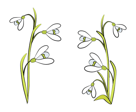 Closeup of Snowdrops on Vector Illustration White Illustration