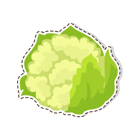 Ripe Cauliflower Flat Vector Isolated Sticker or Icon