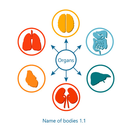 Name of Bodies and Organs Vector Illustration