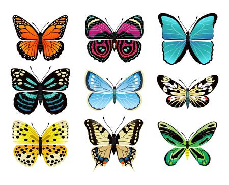 Collection de types de papillons avec des ailes colorées, des antennes et des têtes de papilionidae ensemble de papillons, illustration vectorielle isolée sur fond blanc