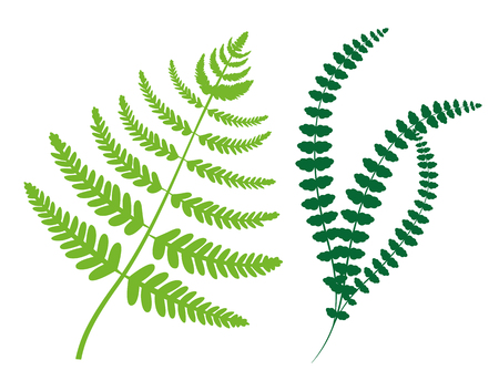 Greenery collection leaves plants and fiddleheads of green color, set of natural herbs, fern branches vector illustration isolated on white background