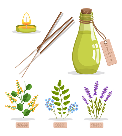 Sandalwood and olibanum, set of herbs and bottle with essence, candle and tag, herbs and titles vector illustration, isolated on white background
