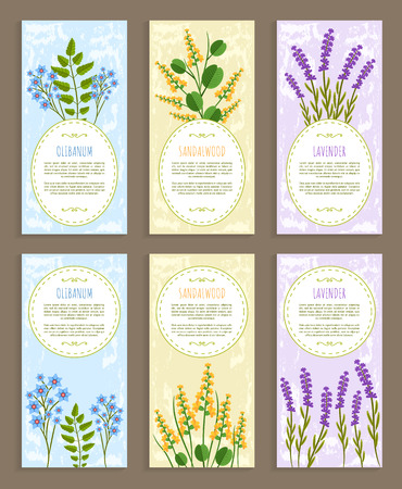 Olibanum covers collection herbs and aroma elements text sample and herbs set sandalwood and lavender vector illustration isolated on white background