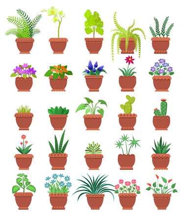 Knights-star and orchid collection of room plants in pots, room plants set with blossom and leaves, vector illustration isolated on white background