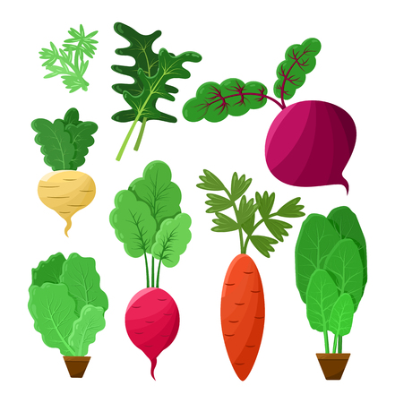 Vitaminic vegetable collection color vector poster, illustration with beetroot, arugula and green salad, beige swede and carrot, radish vegetable Ilustração