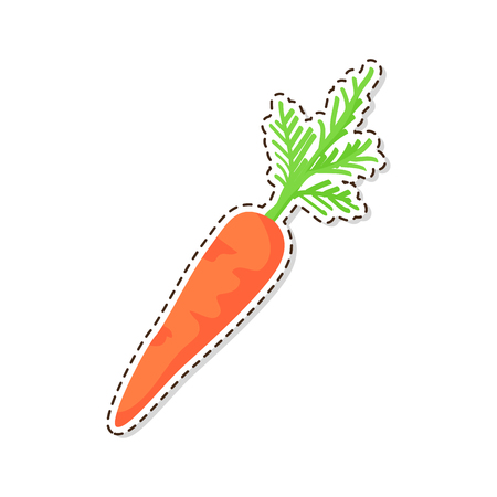 Ripe vegetable sticker or icon. Carrot with leaves flat vector isolated on white background. Vegetarian food illustration outlined with dotted line