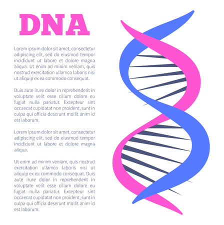 DNA deoxyribonucleic acid chain of nucleotides carrying genetic instructions used in growth development functioning and reproduction vector poster