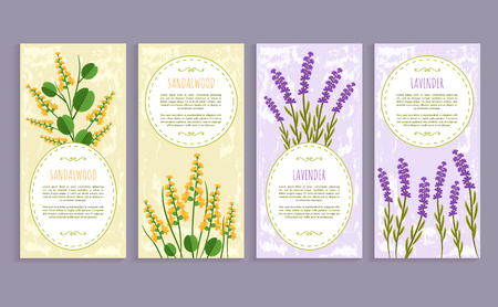 Sandalwood and lavender set of covers with text samples and headlines, herbs set aromatic herbs vector illustration, isolated on white background