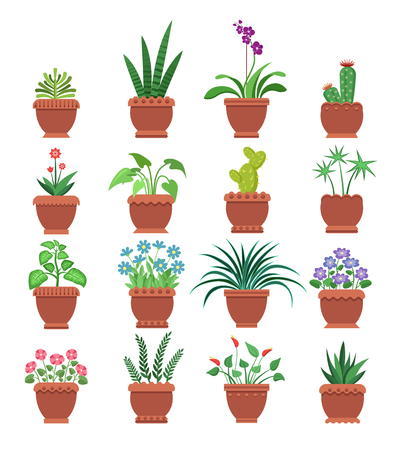 Browallia and clivia cactus collection of room plants potted plants with flowers of different types, vector illustration, isolated on white background