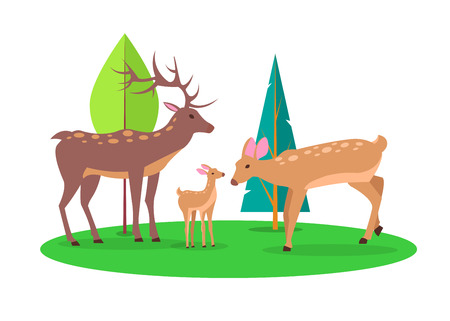 Adult stag and doe with their little fawn in forest cartoon style. Isolated vector illustration of deer family on white background Illustration