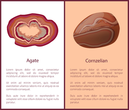 Agate and Carnelian or Cornelian Brown-Red Mineral Illustration