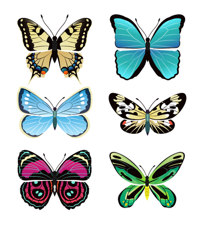 Butterflies types collection with colorful wings, antennas and heads papilionidae set of butterflies, vector illustration isolated on white background