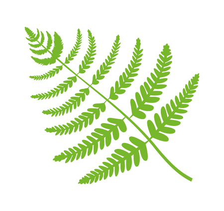 Fern plant big green leaf, filicales brunch closeup, foliage of maidenhair fern, natural plant and decoration vector illustration isolated on white