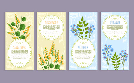 Olibanum and sandalwood set of covers with text sample and headline, herbs collection, olibanum and sandalwood isolated on vector illustration