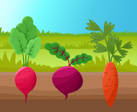 Carrot radish and beetroot vector illustration, healthy agricultures planted into soil, green grass, set of roots with tasty shoots on top, cute icons Stock Vector - 105602965