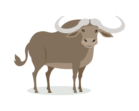 African buffalo cartoon character. Buffalo with big horns flat vector isolated on white. African fauna. Buffalo icon. Wild animal illustration for zoo ad, nature concept, children book illustrating 向量圖像