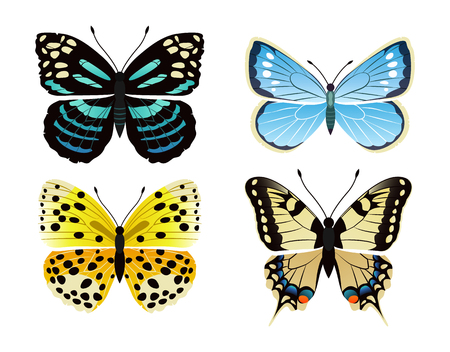 Butterflies types set of creatures, kinds of butterflies, lycaena and morpho peleides, papilionidae vector illustration isolated on white background Illustration