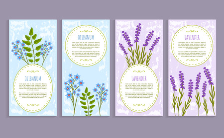 Olibanum and lavender, covers collection with text samples and titles, herbs olibanum and lavender vector illustration isolated on white background