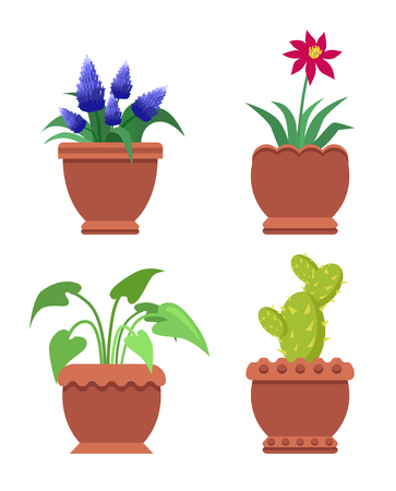 Knights-star and muscari, cactus and aglaonema, room plants, flower flourishing, room plants set vector illustration isolated on white background