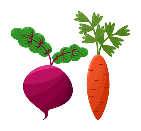 Purple beetroot and orange carrot, vector icons, illustration with white backdrop, vegan food, green roots, healthy vegetables cartoon beet and carrot