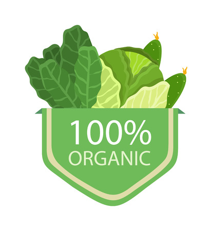 Organic 100 cabbage lettuce 100 organic products collection and headline vegetables and greenery vector illustration isolated on white background