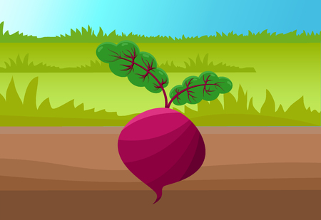 Round beetroot template, colorful illustration, green grass and brown soil, bright sky, sunny day, purple beet with two small sprouts, vector icon Ilustração