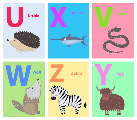 Alphabet poster with U, X, V, W, Z, V letters vector illustration. Prickly urchin, funny xiphias, black viper, wild wolf, cute zebra and fluffy yak