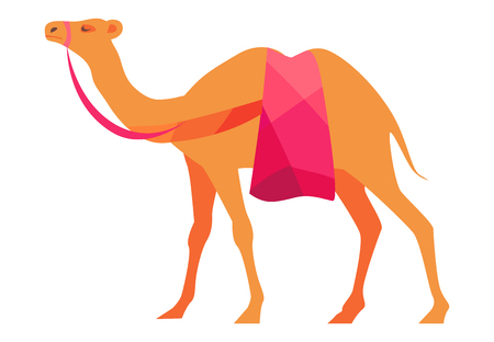 Indian camel vector illustration isolated on white background. Arabic mammal animal, national symbol of India and Africa