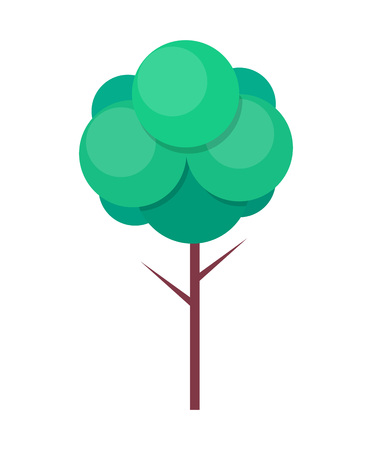 Green Tree with Thin Trunk and Green Leaves Vector