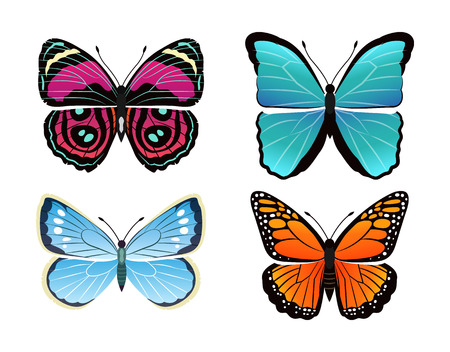 Butterflies collection types morpho peleides and viceroy limenitis archippus butterflies set, insects vector illustration isolated on white background Ilustração