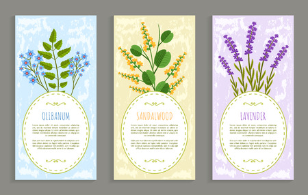 Lavender and olibanum set of covers with headlines and text sample, herbs collection, covers herbs vector illustration isolated on white background Illustration