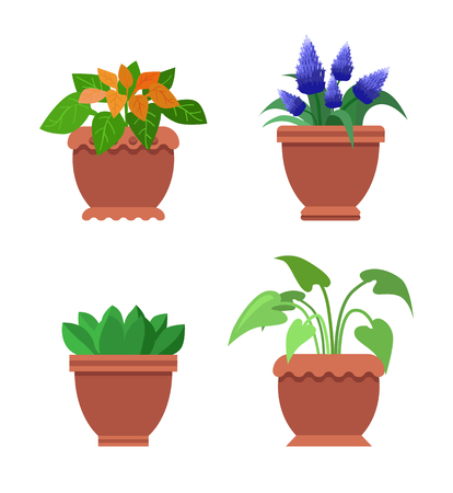 Pseuderanthemum and muscari, aglaonema collection of room plants, set of room plants, potted leaves vector illustration isolated on white background Illustration
