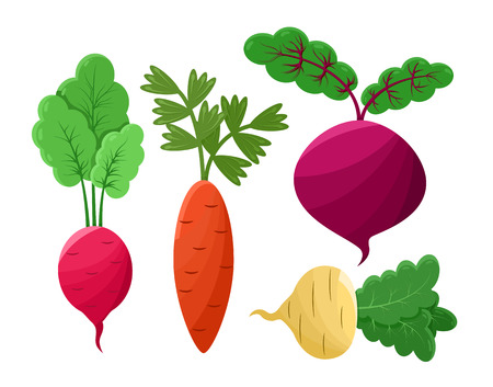 Beetroot and radish set of icons healthy food and vegetables collection, carrot vegetables and leaves vector illustration isolated on white background