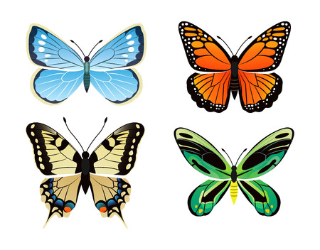 Butterflies kinds collection with colorful wings, ornithoptera priamus poseidon butterfly types set, vector illustration isolated on white background