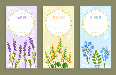 Lavender and olibanum set of covers with headlines and text sample, herbs collection, covers herbs vector illustration isolated on white background