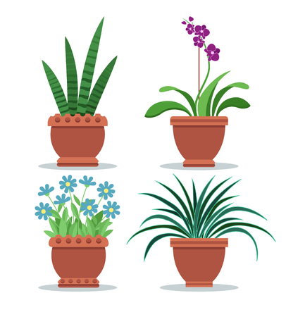 Sansevieria room plant orchid and chlorophytum comosum, collection of room plants in pot, flowers set vector illustration isolated on white background