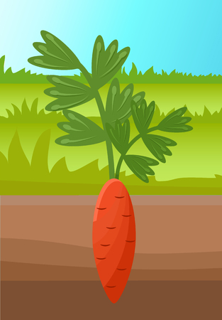 Cartoon carrot vegetable in soil, vector banner, orange vegetable with green sprout on top, brown ground, colorful illustration with tasty carrot