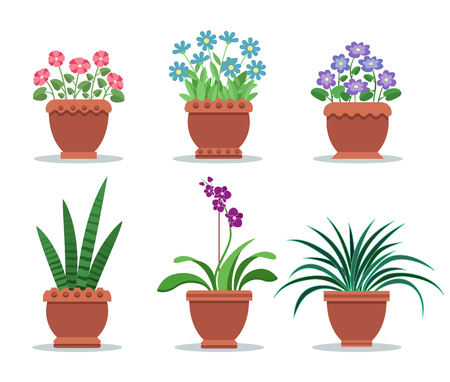 Room plants in clay pots for interior design decor. Flowers with pleasant scent and leafy green plants. House vegetation vector illustrations set. Illustration