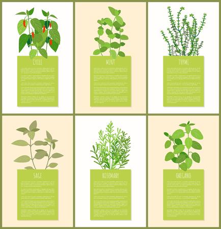 Chili et menthe, ensemble d'épices thym sauge et origan, plante de romarin, différentes épices, plantes aromatiques, échantillon de texte, ingrédients du plat vector illustration Vecteurs