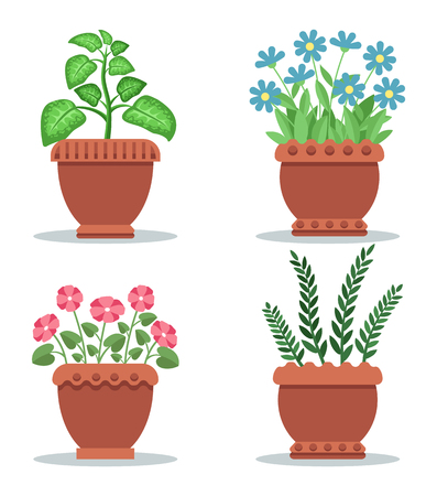 Indoor foliar plants and blooming flowers. House plants in clay pots. Leafy plants and beautiful flowers for room decor isolated vector illustrations.